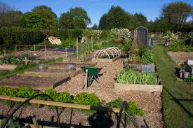 Felpham has two allotment sites located along Felpham Way. For more information please contact the Clerk.